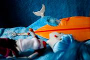 7 ataque de tiburon