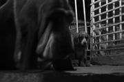 Un perro sin amo (quien dijo miedo???)))