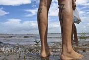Cruce a nado del Orinoco/Caroni