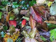 "SNA/ ""feeling autumn - the beauty in caducity"""
