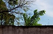 11. Las hojas y el viento