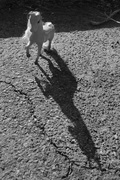 Pony_Varonil