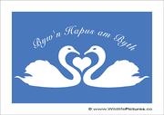 Welsh Heart of Swans
