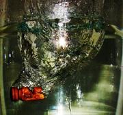 Un caballito de mar (al trote)