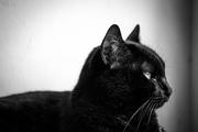 En blanco y negro Kity