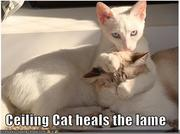 ceiling cat heals the lame