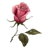 Amo flores