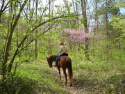 Red Buds in Bloom in Pineville MO