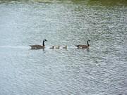 Williamsport Lake ride 4-30-10