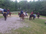 Ridin with the Mules