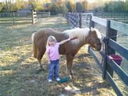 Butterscotch - my first pony