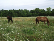 Moose and Keno in the pasture