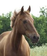 Horse shots