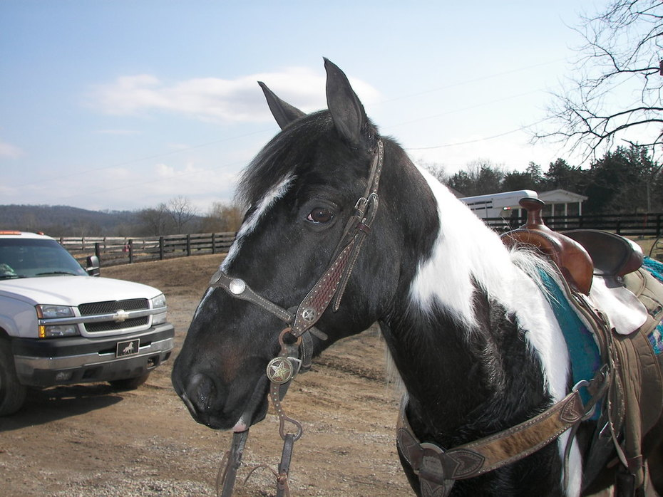 Chief, January 2011