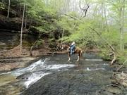 Laurel Hill Lake Trails