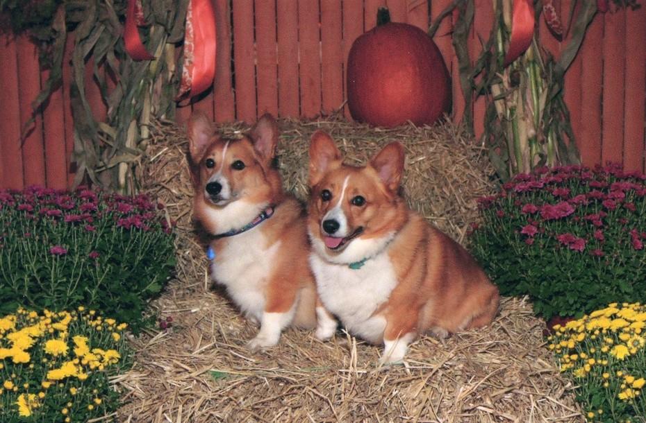Toby & Sierra