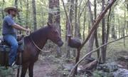 Josh Guin desensitizing Dakota Mustang