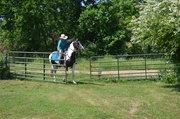 My Horse Photos