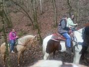 B & B Saddle Up Farm