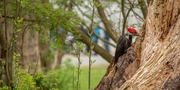Bird Week: Feathers and Fungi Tour