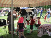 This cow statue was a big hit with the children!