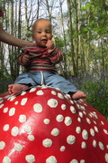 baby fly agaric
