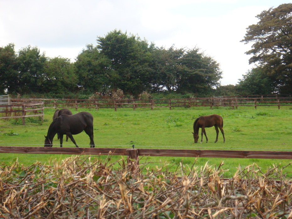 Hill of Tara Grazing Horses