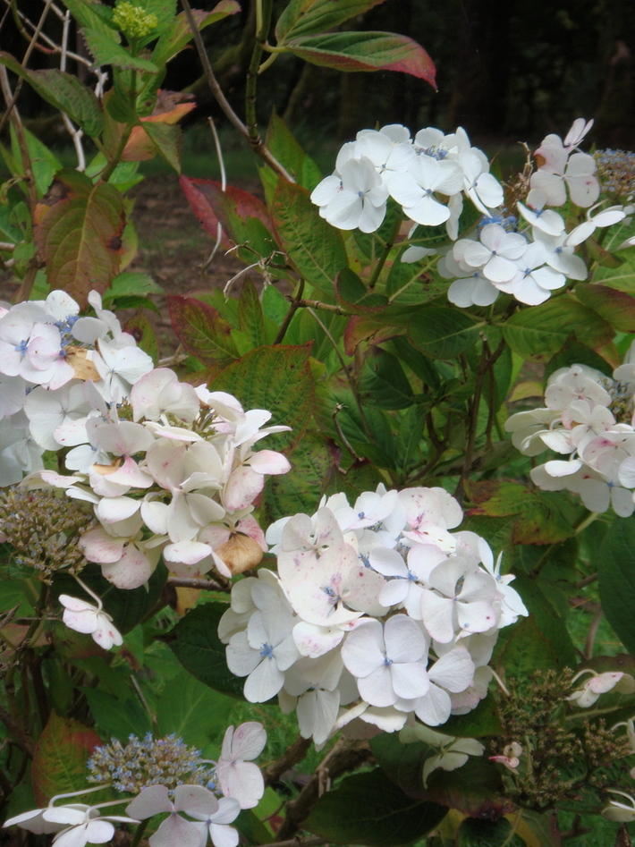 At Kylemore Abbey Garden