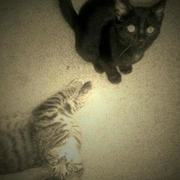 Kitty Powers!