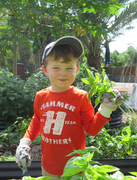 Picking your own vegetables from the education garden