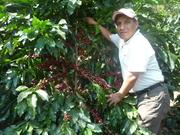 Una planta de café