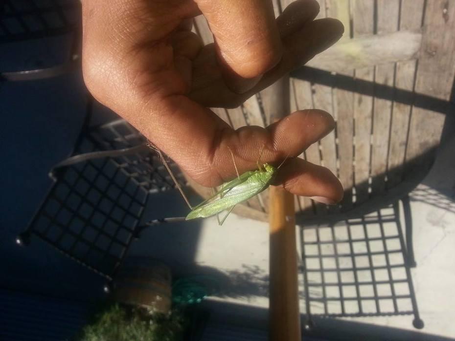 Grasshopper-Dsunn