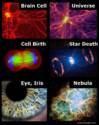 We Are Nature Intelligent-Universe-Wholeness