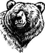 Bear Grizzly Bear Drawing