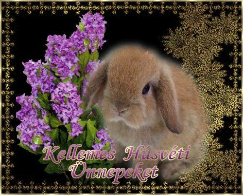 www_tvn_hu_10d371781f898169086f4e0589867685[1]