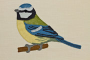 Blue-Tit-in-Needlelace
