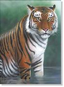Bengal Tiger 72dpi