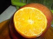 foto  de  limão   tirada   tim max