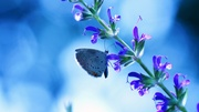 Flower-with-butterfly-blue-glare
