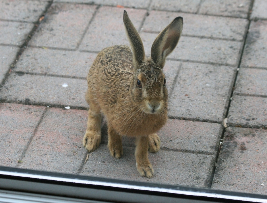 A visitor at the patio door