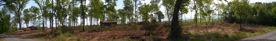 Panoramic following SilvopastureThinning - Virginia
