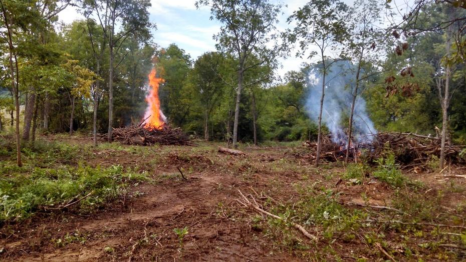 Logging Slash burn - Virginia