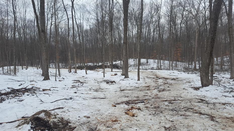 January 2018 Hudson Valley Silvopasture Harvest