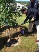 ATFD Tree Ceremony