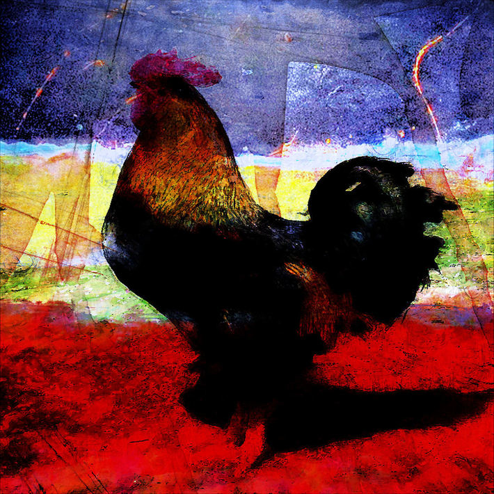 Blue Yellow Red Rooster