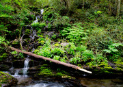 Small waterfall along Rough Creek, 5-9-19
