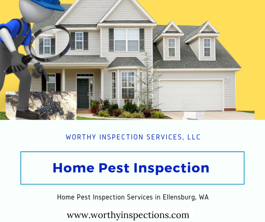 pest-inspection-worthy-home-inspection-wa