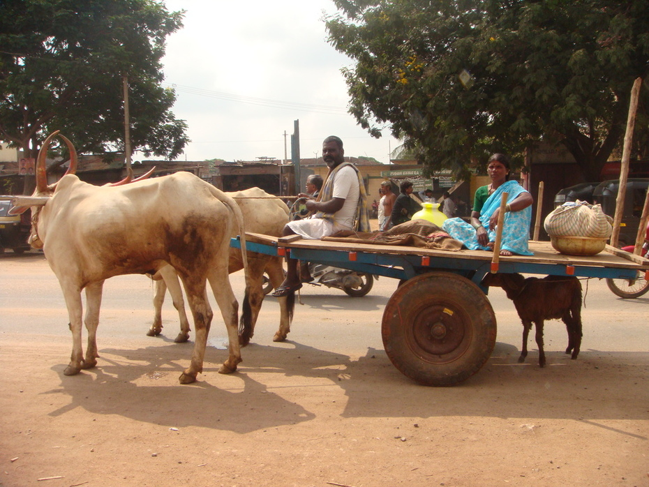 Rui ....remember how we ran to photograph this cart... the cows pulling the goat.....