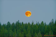 Fullmånen över Moskosel den 25 maj kl. 00:11, 2013.