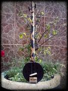 2 String Coconut Resonator